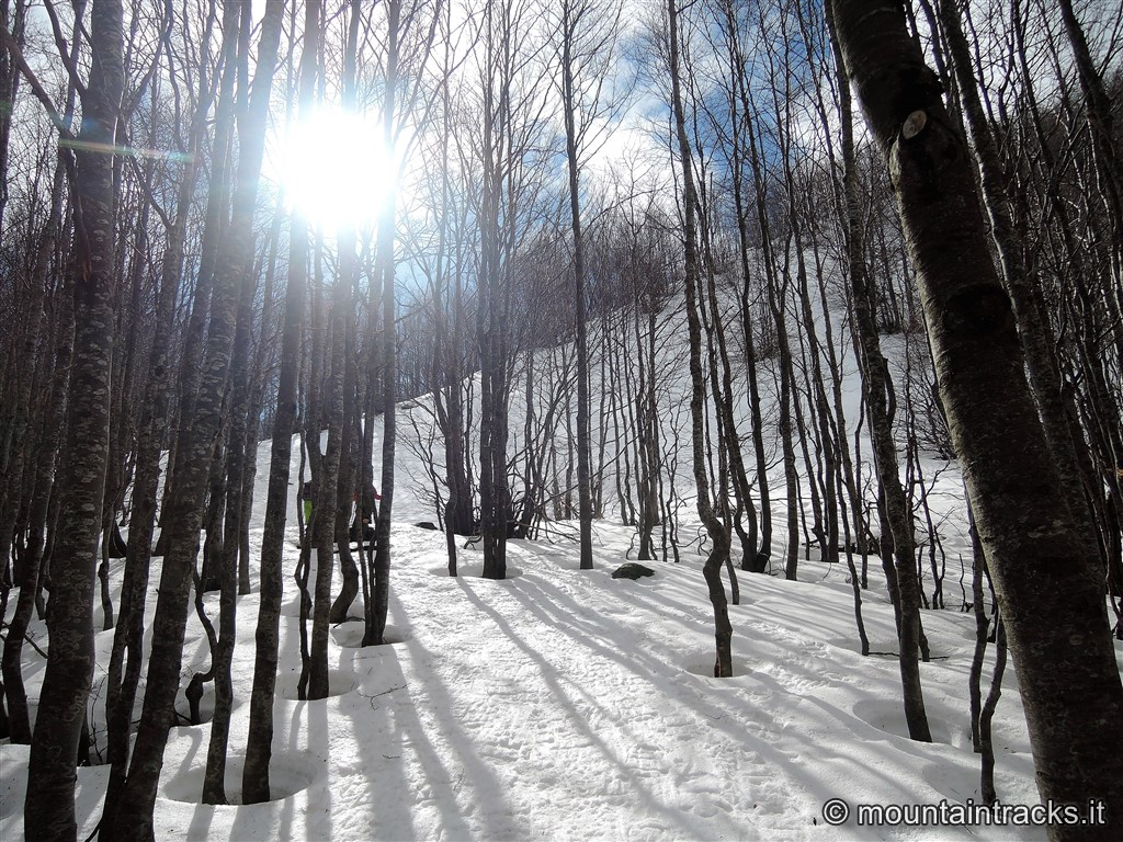 snow trees sun