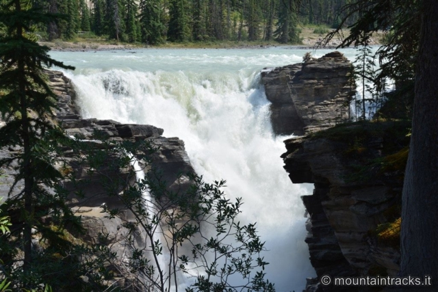 Athabasca Falls @ Jasper